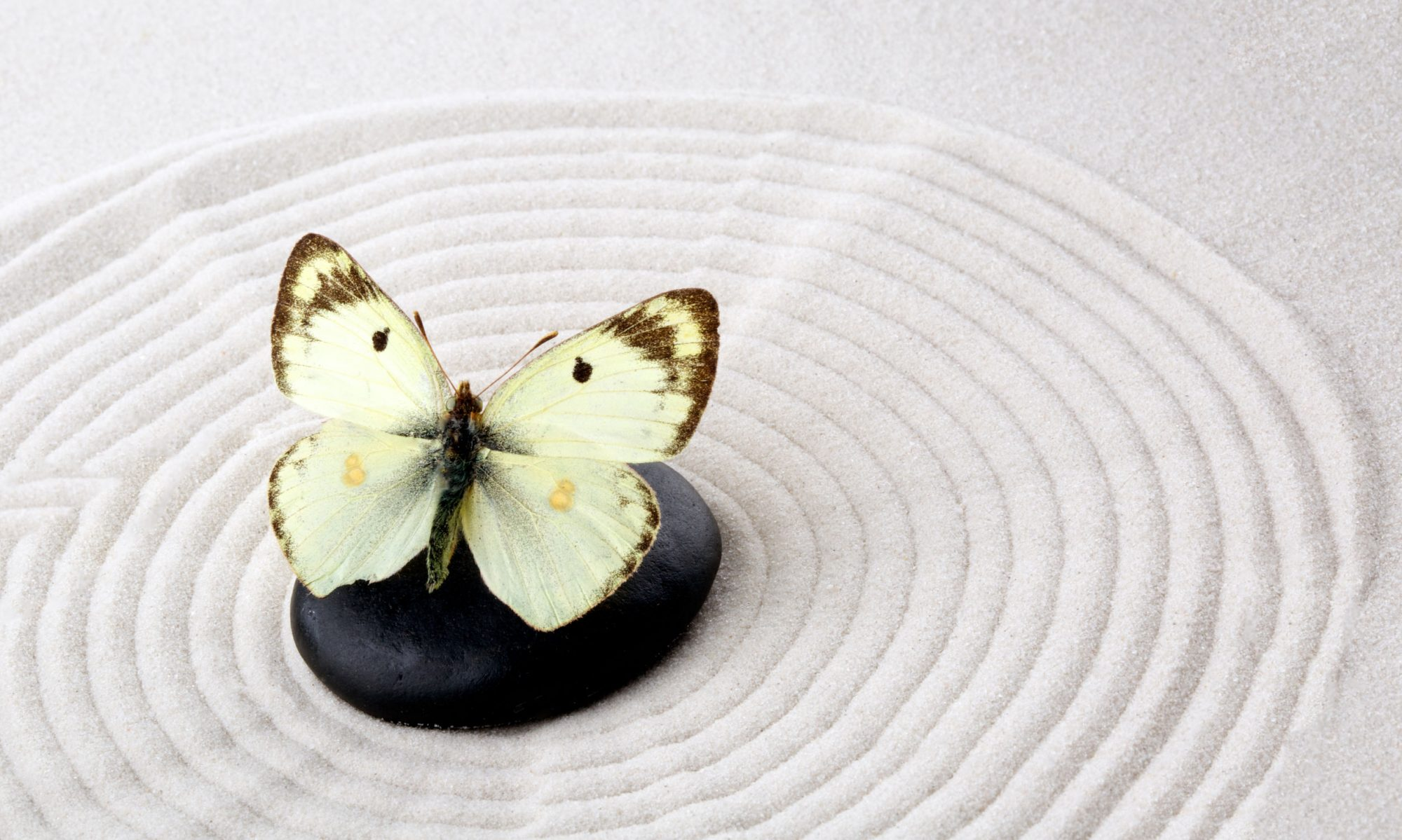 Butterfly Effects Counseling